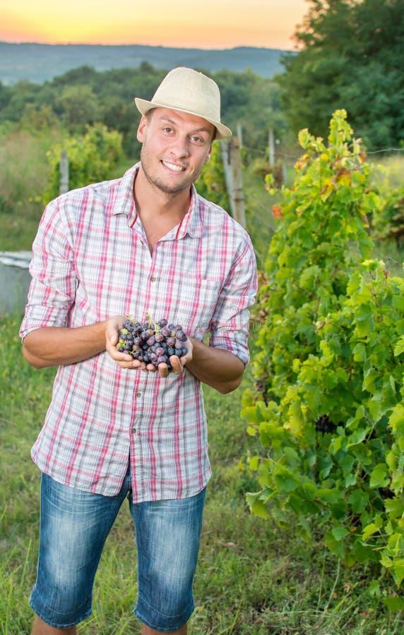 Stolzer Landwirt, der frisch ausgewählte Trauben hält lizenzfreie stockfotografie