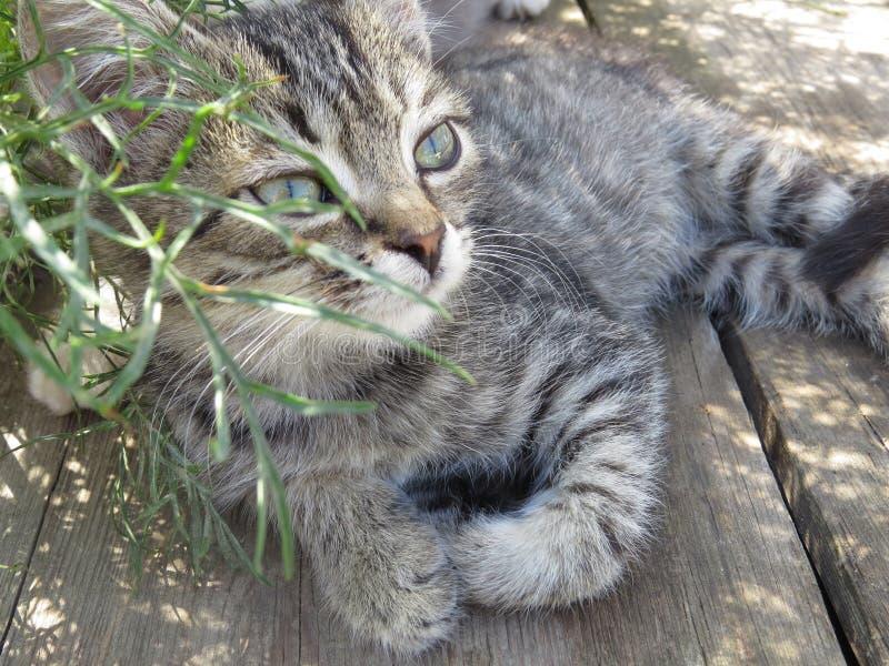Stolzes Kätzchen stockfoto