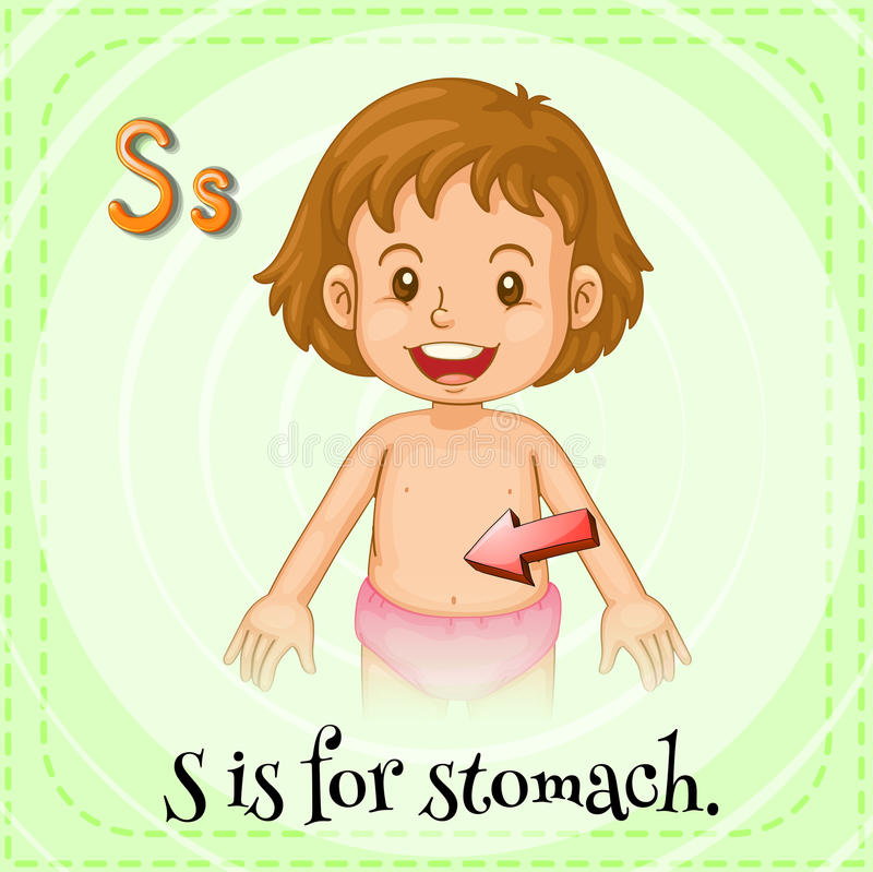 Stomach. Flashcard letter S is for stomach vector illustration