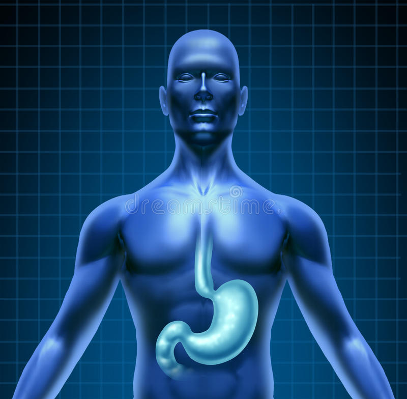 Stomach And Human Digestion stock illustration