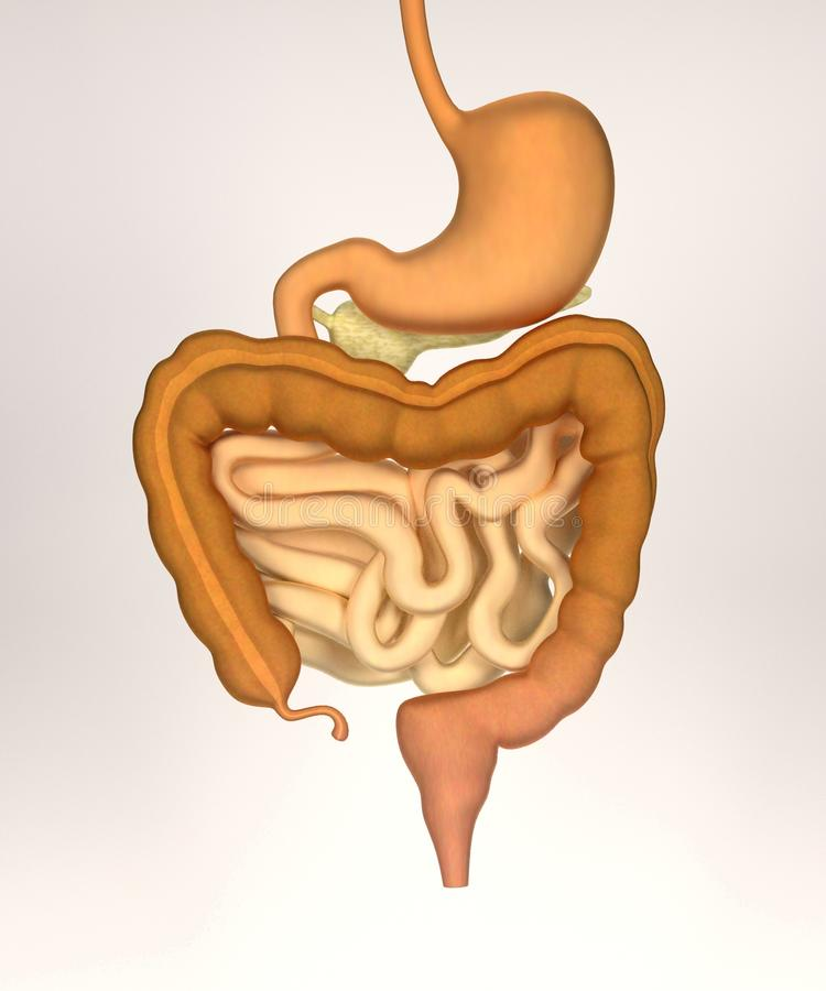 how to clean your stomach and intestines