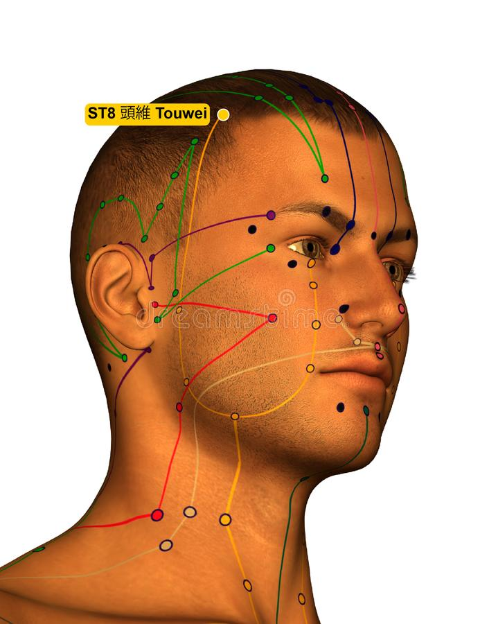 Acupuncture Point ST8 Touwei, 3D Illustration, White Background royalty free stock image