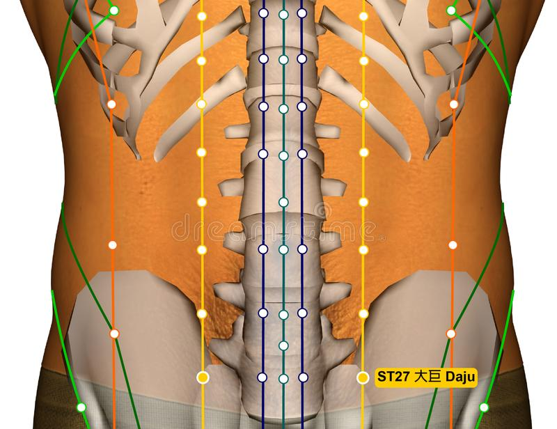Acupuncture Point ST27 Daju, Stomach Meridian Stock ...