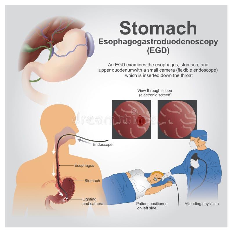 stomaco illustrazione vettoriale