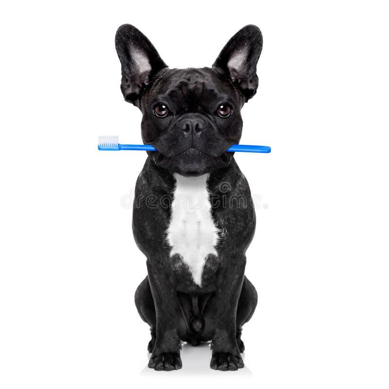 Stomatologiczny toothbrush pies zdjęcia stock