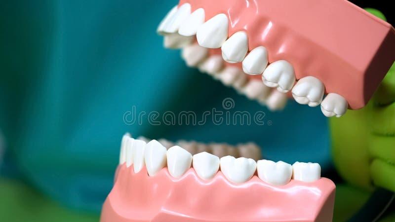 Stomatologist που παρουσιάζει τεχνητό πρότυπο σαγονιών, που διδάσκει την οδοντική προσοχή, οδοντιατρική στοκ φωτογραφίες