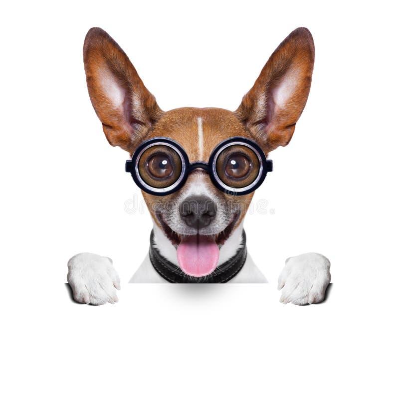 Stomme gekke hond royalty-vrije stock afbeeldingen