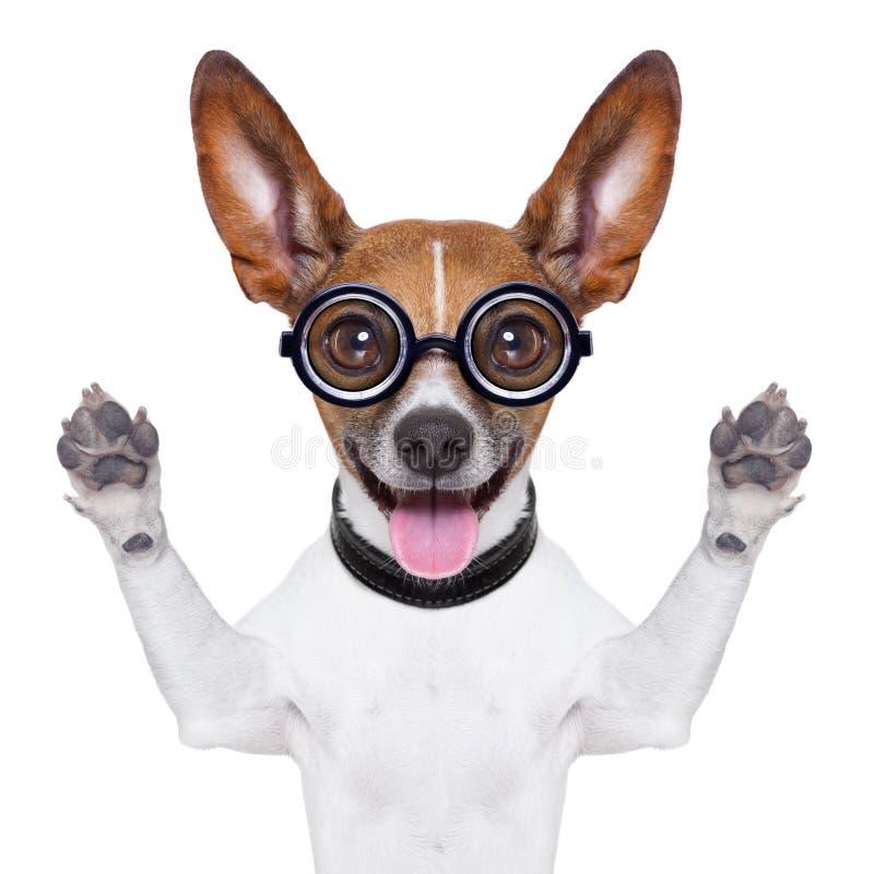 Stomme gekke hond royalty-vrije stock foto