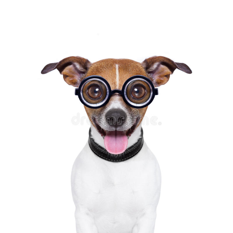 Stomme gekke hond royalty-vrije stock fotografie