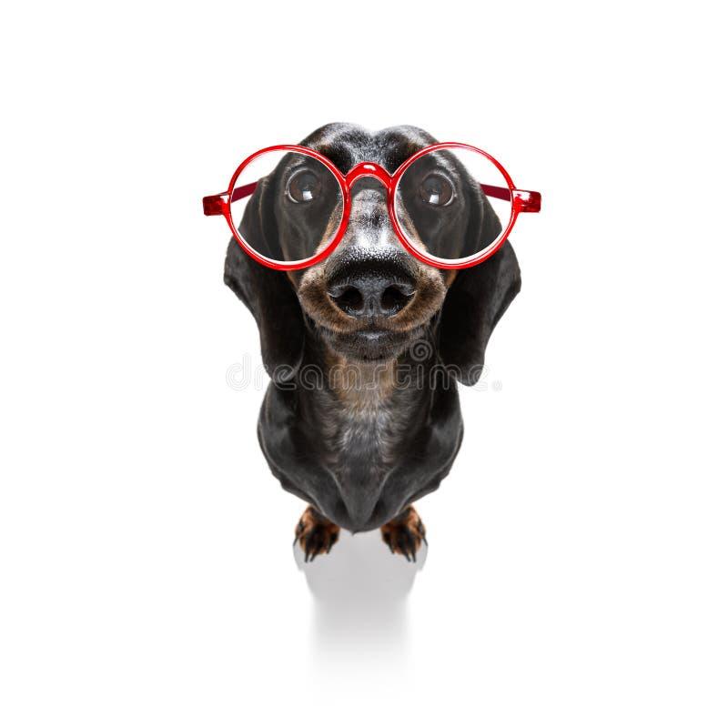 Stomme gekke hond stock afbeelding