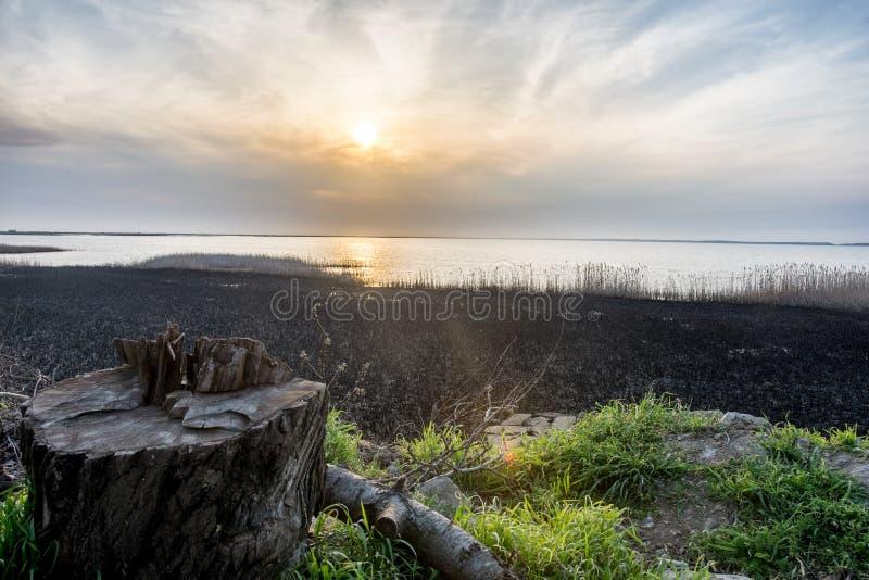 Stomp dichtbij het meer bij zonsondergang royalty-vrije stock afbeelding