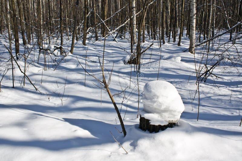 Stomp onder de sneeuw royalty-vrije stock foto