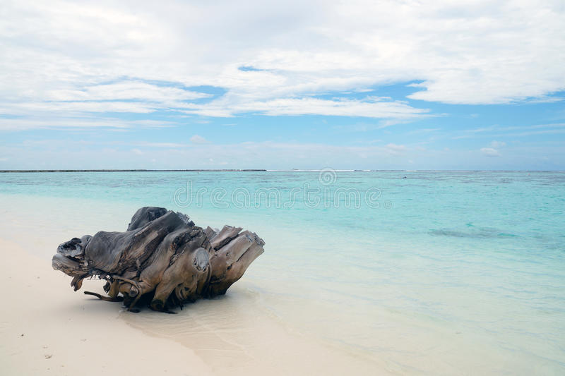 Stomp op het strand in de Indische Oceaan stock fotografie