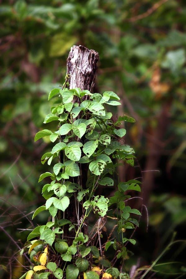 Stomp oude en kleine bomen die op het hout op aard groene achtergrond groeien stock foto's