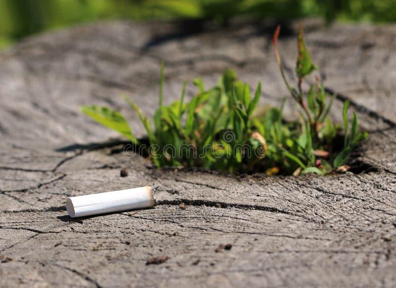 Stomp van sigaret die op boomstomp het ontkiemen liggen royalty-vrije stock foto's