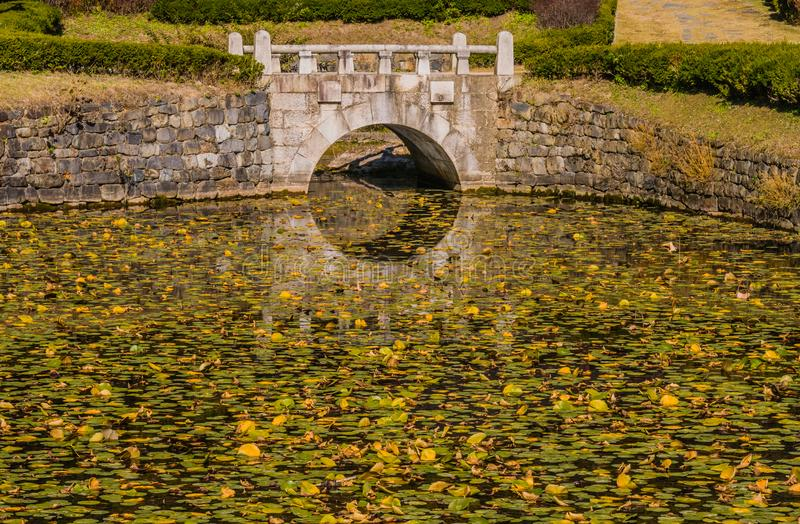 Stone arch footbridge over a pond. Covered with green lilly pads in a public park stock photo