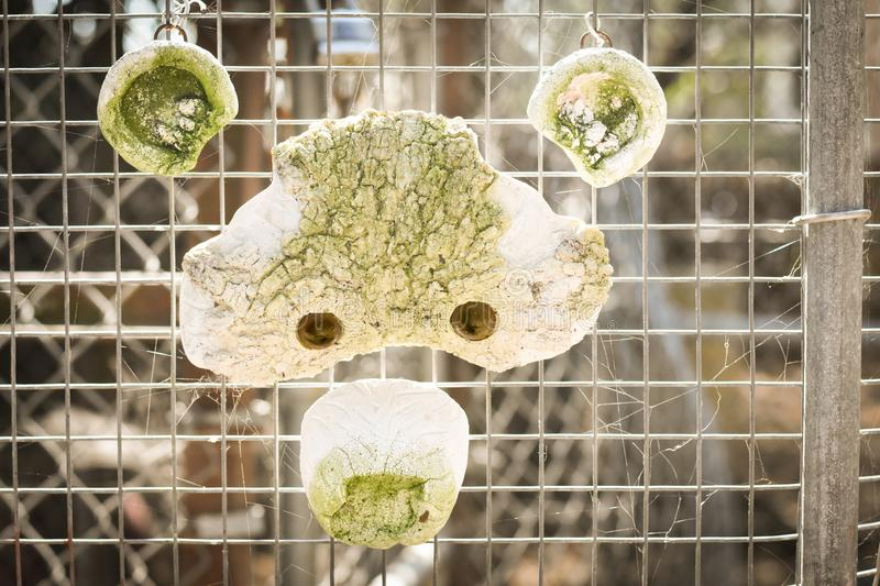 Bear Face. Stone Bear face hanging on a chain link fence royalty free stock photos