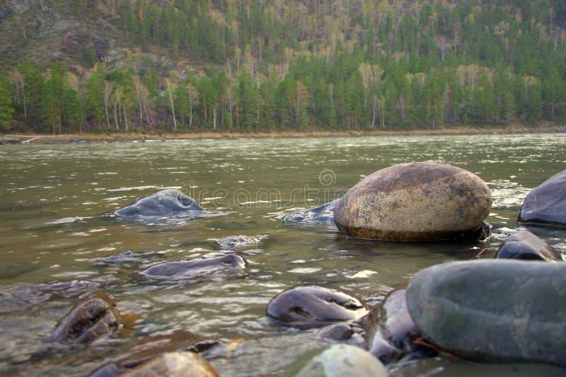 Stone boulders on the banks of the mountain river Katun. Altai, Siberia, Russia stock image