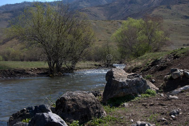Stone boulders and a lonely tree on the banks of the mountain river Wajan. Altai, Siberia, Russia royalty free stock photo