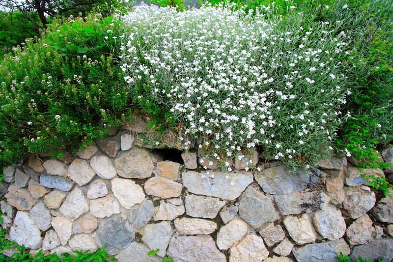 Stone-built wall and plants royalty free stock photography