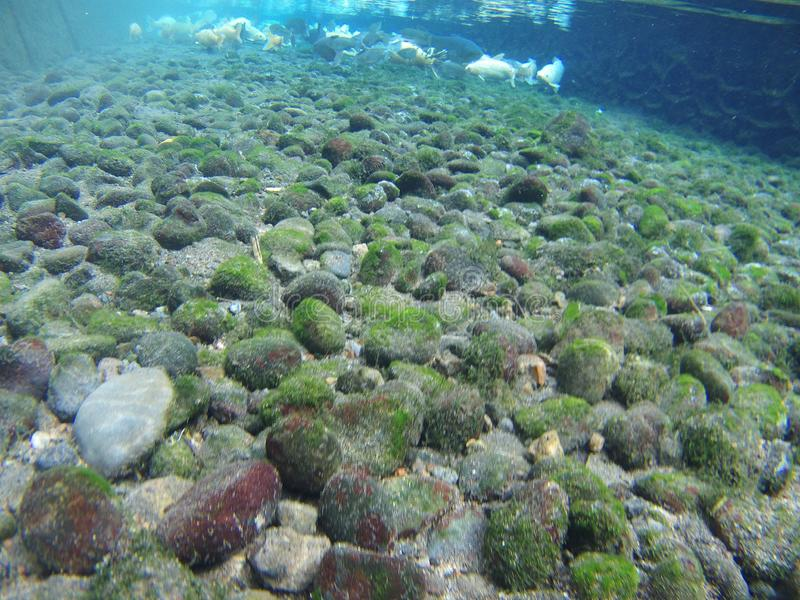 Stone coral in the water royalty free stock photography