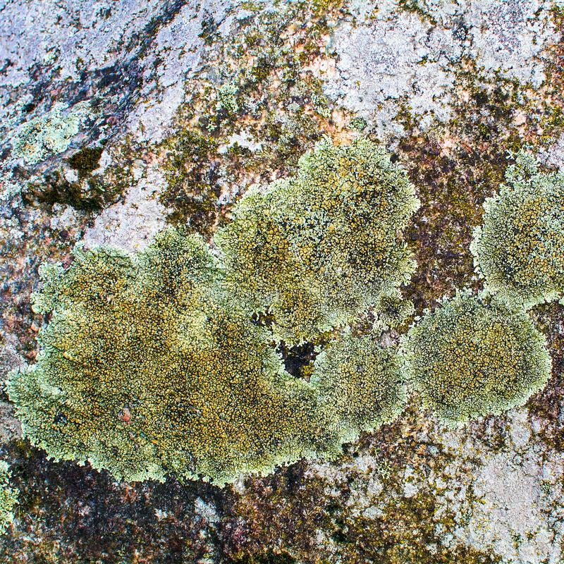 Stone, covered with mold, moss stock photography