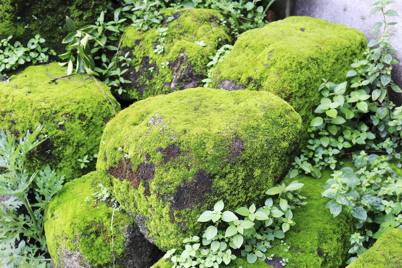 Stone covered with moss stock photo