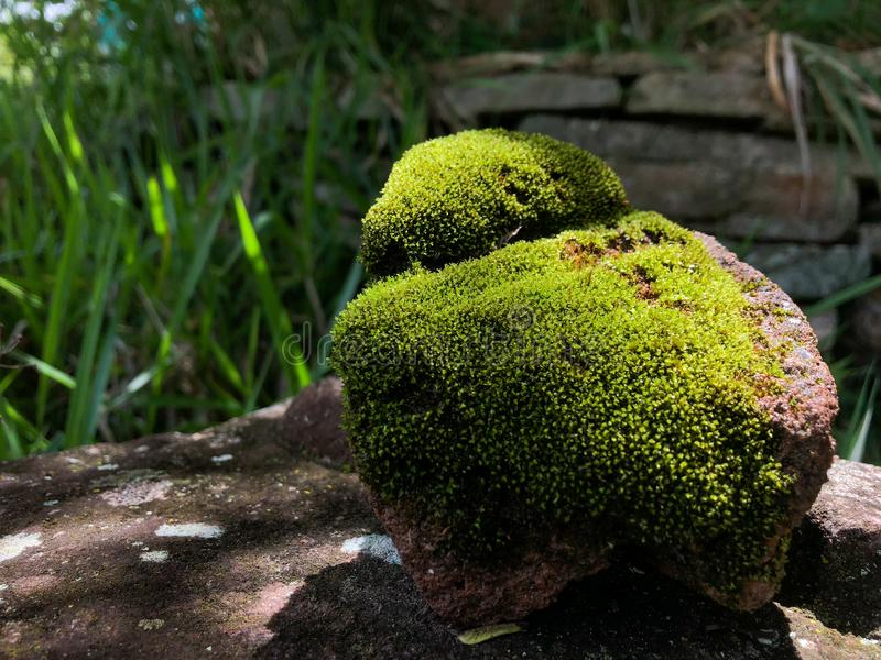 stone covered with moss feeding on sunlight stock photos