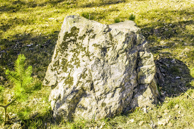 The stone covered with a moss on a glade in sunny day in the spring royalty free stock photography