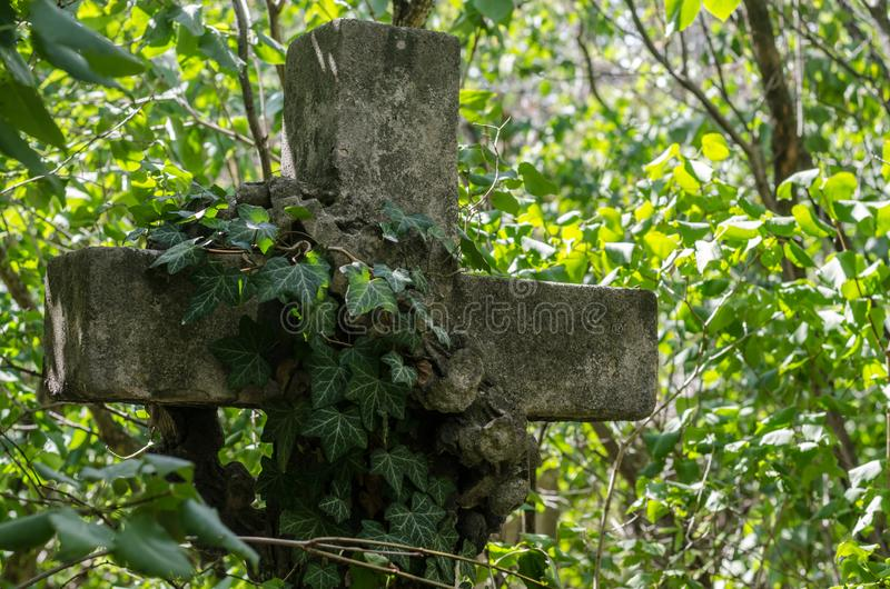 stone cross with ivy royalty free stock photography