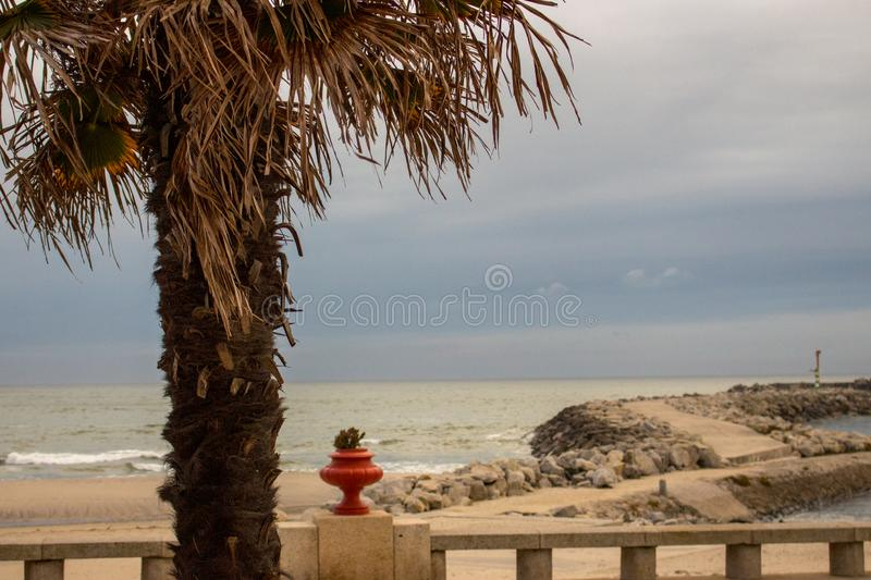 Stone dam with lighthouse and palm tree foreground. Pier on coast in the evening. Embankment on tropical seaside. stock image