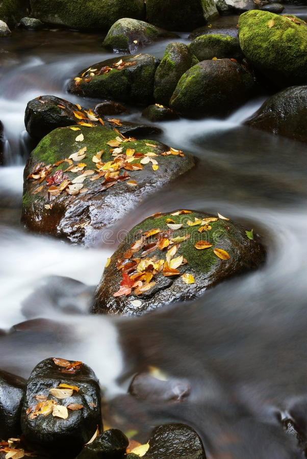 Download Stone Fallen Leaves And Stream Stock Photo - Image: 16794616