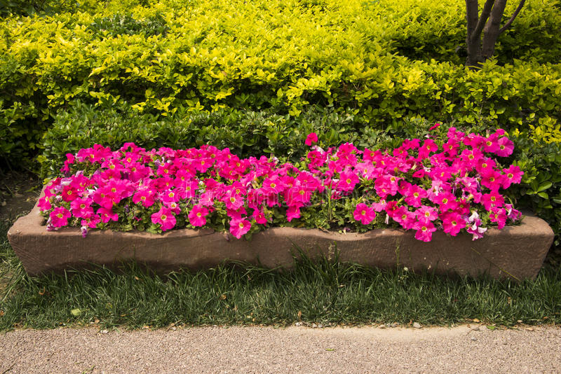 Stone flower bed flower stock photo image of china for Green plants for flower beds