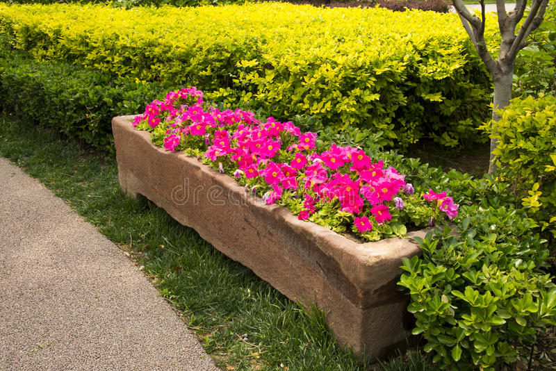 Stone flower bed flower stock image image of beds for Green plants for flower beds