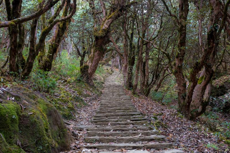 Stone footpath in fantastic green tropical jungle. Rainforest in Nepal, Himalaya royalty free stock images