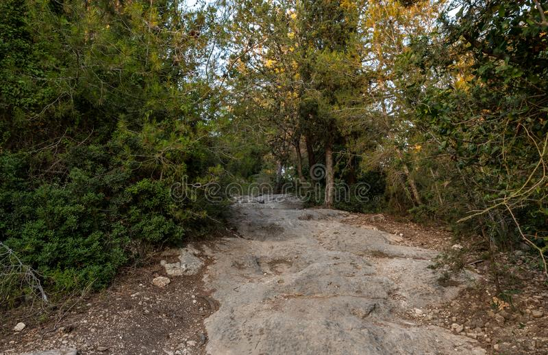 The stone  footpath leading through the Hanita forest in northern Israel, in the rays of the setting sun. The stone footpath leading through the Hanita forest in royalty free stock photography