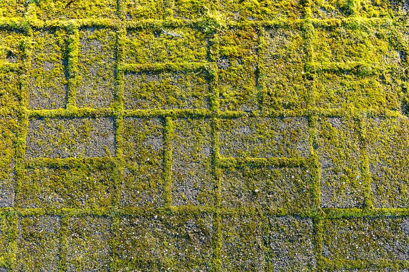 Stone footpath with moss, close up image stock images