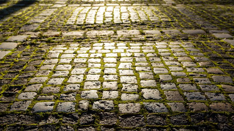 Stone footpath with moss in the morning sunlight. Fairy, magic, mystical background stock images