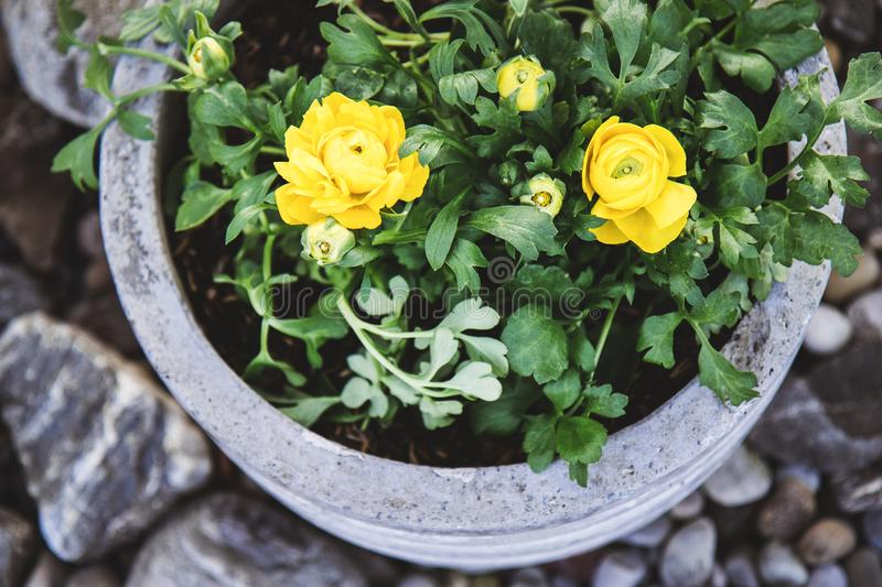 Stone garden arrangement with spring flowers in large concrete p download stone garden arrangement with spring flowers in large concrete p stock image image of mightylinksfo