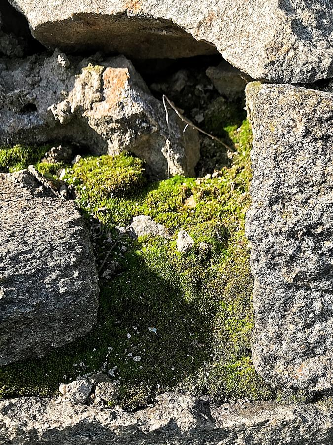 Stone, green moss, summer, Spring. Green moss between rocks in light weather, mountains, beautiful view stock images
