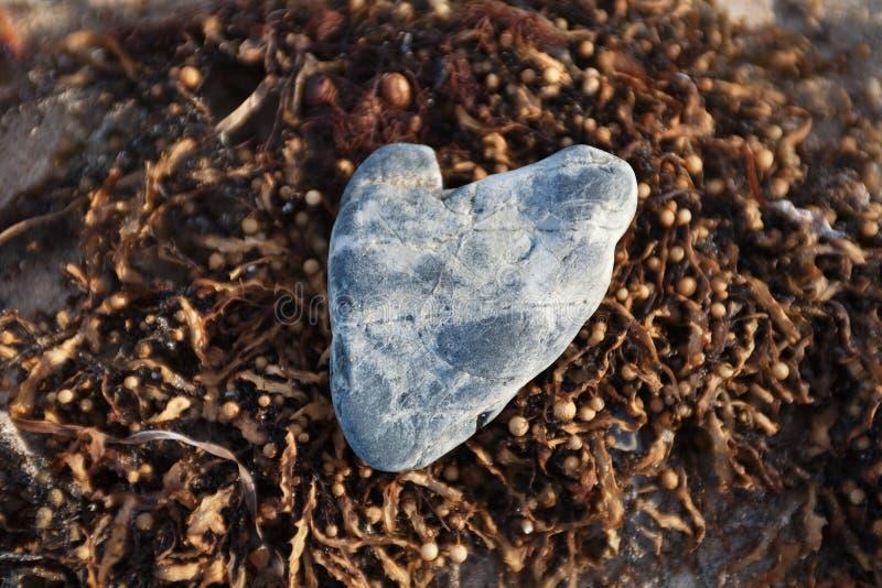 Download Stone Heart stock image. Image of heart, romance, beach - 20837403
