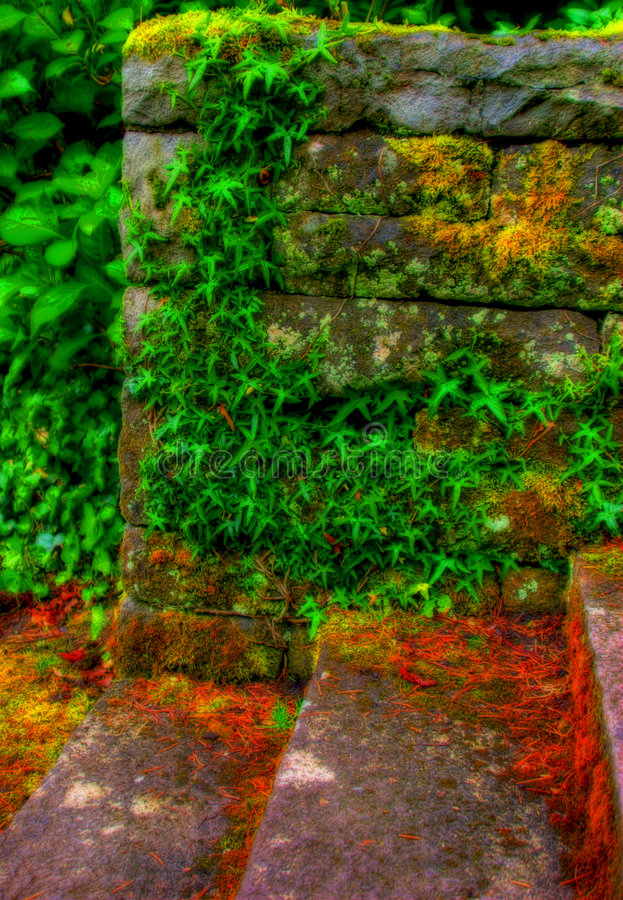Download Stone And Ivy stock photo. Image of outdoors, steps, climbing - 2473648