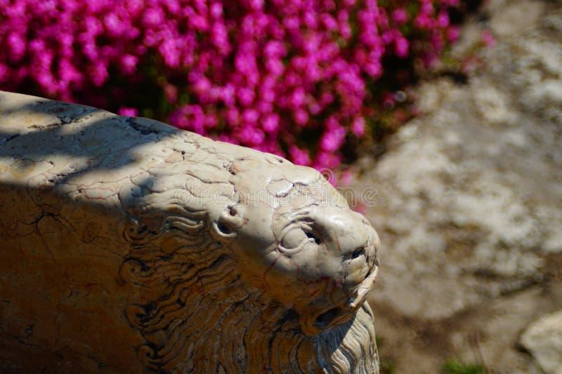 Stone Lion from Balchik. Armrest from the Stone Throne of Queen Mary of Romania, Balchik Garden, Bulgary stock photography
