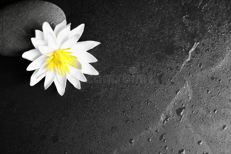 Stone, lotus flower and space for text on wet background, flat lay. Zen lifestyle. Stone, lotus flower and space for text on wet black background, flat lay. Zen stock images
