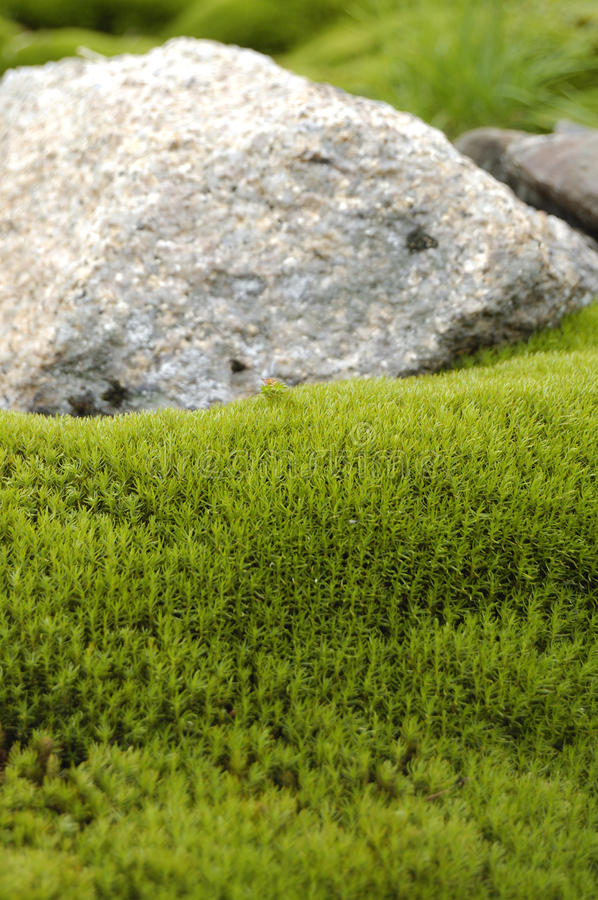Download Stone and moss stock image. Image of environment, ground - 11461975