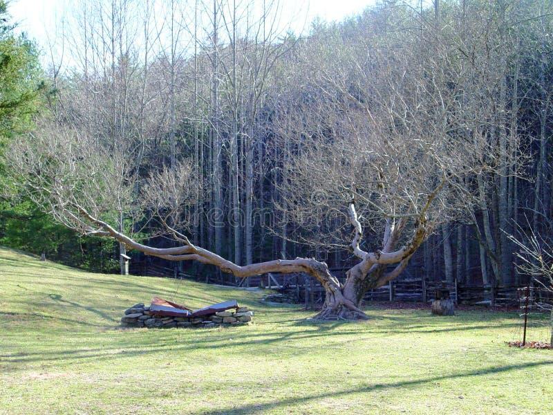 Stone Mountain State Park Meadow stock photo