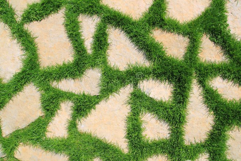 Stone path in green grass garden texture royalty free stock image