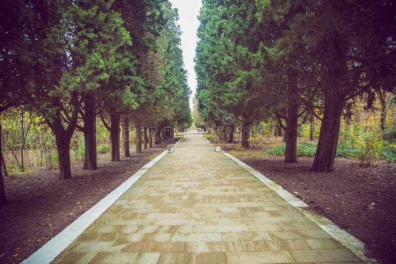 The stone path inside the park . stone path between pine trees royalty free stock photo