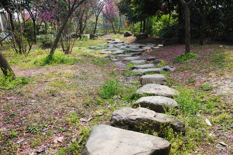 Download Stone Path With Plum Blossom Stock Image - Image: 24254945
