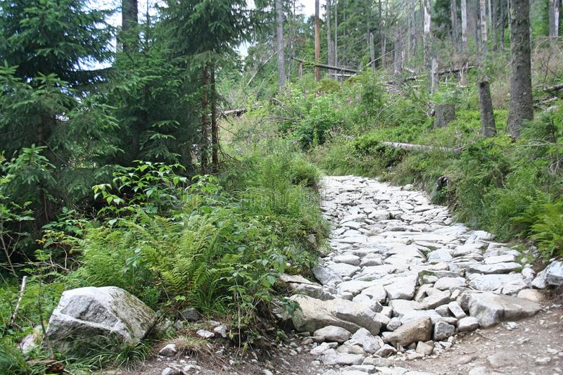 Stone path in the Tatra Mountains. Leading to the top of the mountain royalty free stock photo
